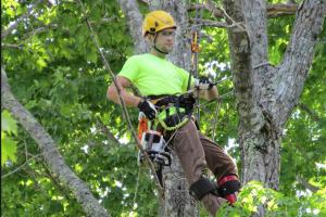 tree services | spraying
